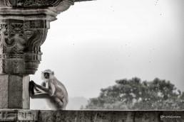 Mono en templo de India