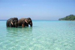 Elefantes en Andamán