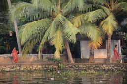 Palmeras en Kerala