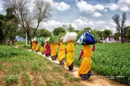 Segadoras en Jaipur